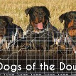 Dogs of the Dow(ダウの犬)、ダウ10種【2017年】